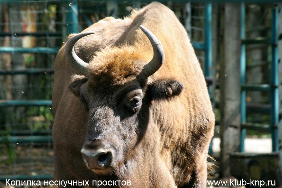 Заповедник Приокско-Террасный