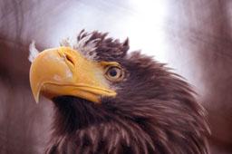 Парк птиц «Воробьи» в Калужской области